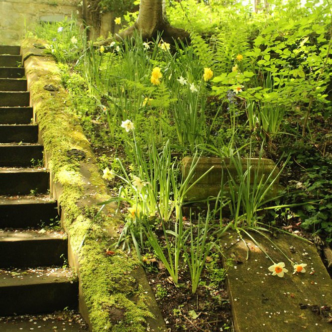 Daffs by the steps.